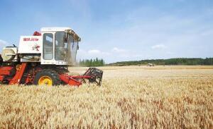 2018粮食产业经济总产值3600多亿公斤 增幅望达10%